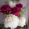 写真: シャクヤク~花瓶に飾りました