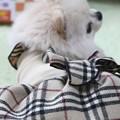 Photos: プリンセス~♪