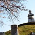 写真: 耳塚の染井吉野(ソメイヨシノ)