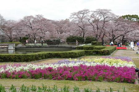 染井吉野咲く京都府立植物園