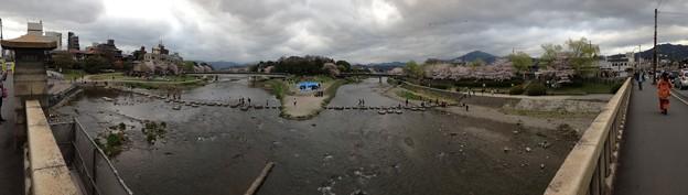 写真: 賀茂川と高野川の桜並木