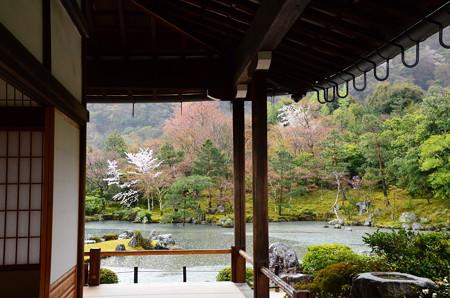 曹源池の桜風景