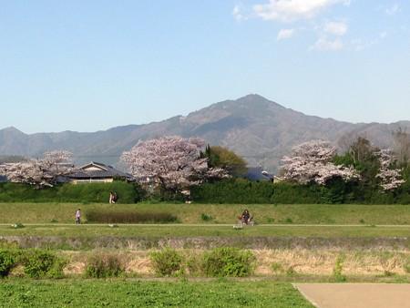 賀茂川の桜と比叡山