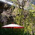 写真: 嵐山の桜風景