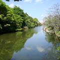 写真: 初夏の南郷公園