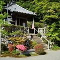 写真: 躑躅咲く蔵宝寺