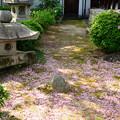 写真: ピンクのカーペット