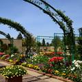 写真: ガーデンミュージアム比叡の花々