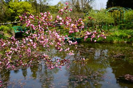 花海棠とモネの池