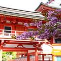 写真: 法華総持院・東塔前の関山(カンザン)