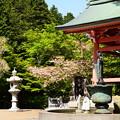 写真: 鐘楼脇の普賢象(フゲンゾウ)
