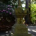 写真: 石楠花ともみじの新緑