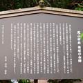 写真: 菊桜の由緒