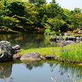 杜若咲く曹源池