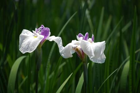 春の訪(ハルノオトヅレ)
