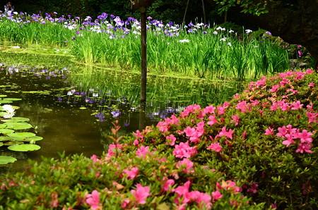 皐月と花菖蒲の白虎池
