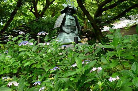 第二紫陽花苑