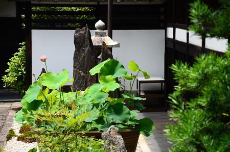 蓮咲く顕岑院