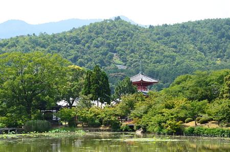 大沢の池越しの多宝塔