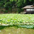 写真: 漱枕居と睡蓮