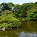 写真: 夏の栖凰池