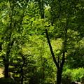 写真: 緑の風が吹く