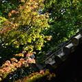 写真: 色づき始めた金地院