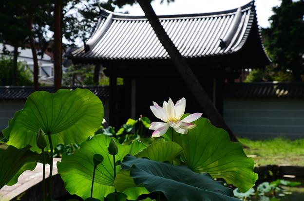 写真: 一天四海(イッテンシカイ)