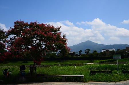 百日紅と比叡山