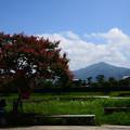写真: 百日紅と比叡山