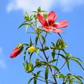 写真: 夏空の花