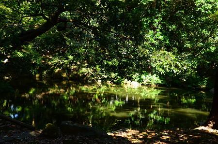 夏の近衛池