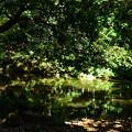 写真: 夏の近衛池