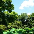 写真: 8月の紫陽花園