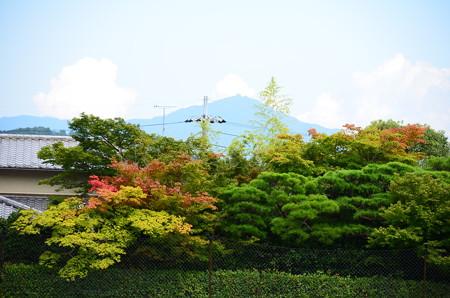 比叡山を背景にした色付き