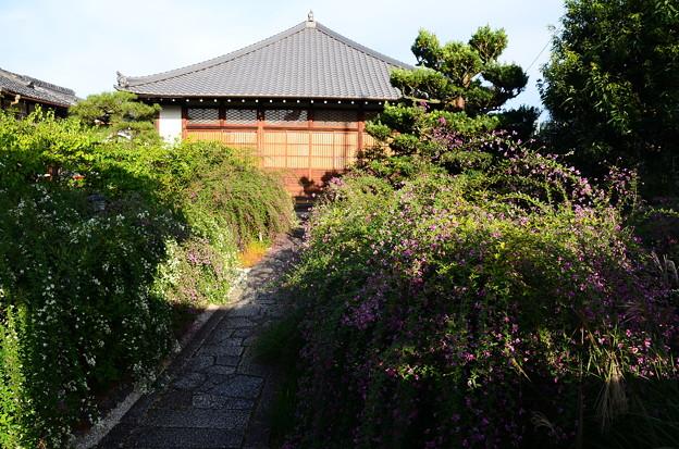 萩満開の常林寺