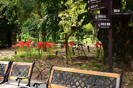 植物園の彼岸花風景