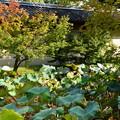 写真: 夏の終わりと秋の初めと