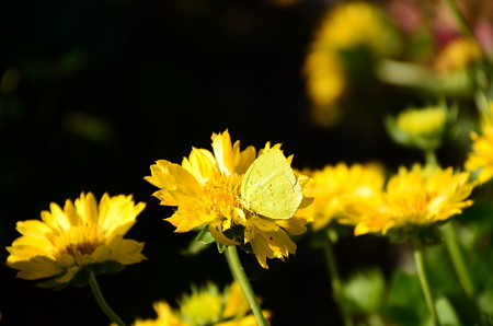 黄色のコラボ
