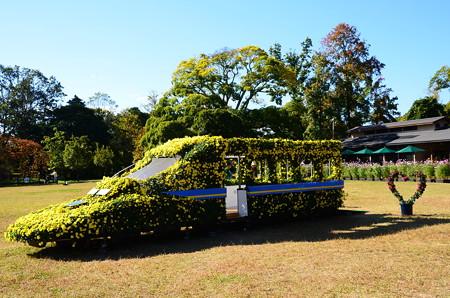 菊のイエロードクター