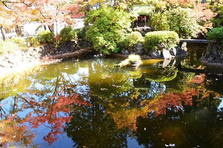 弁天池の色付き