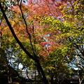 Photos: 本堂東