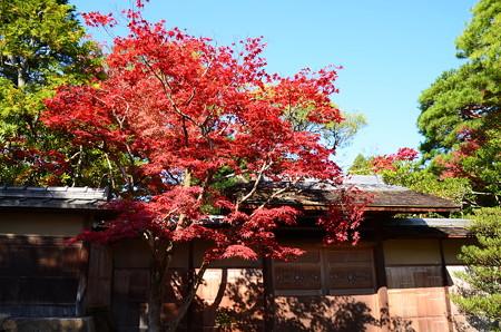 怡園の紅葉