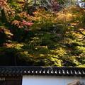 南禅寺の色付き