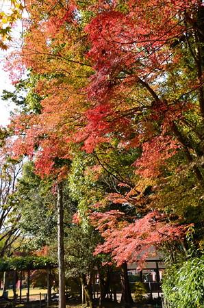 渉渓園の紅葉