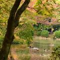 紅葉を泳ぐ鴨とそれを撮る人