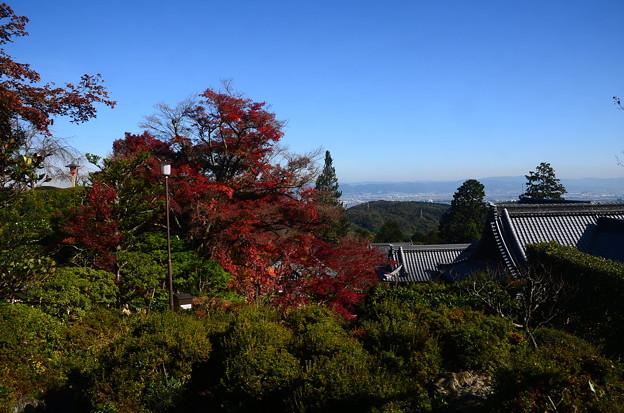 写真: 阿弥陀堂からの眺め