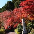 写真: 稲荷社への道