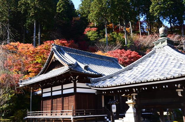 紅葉に彩られる釈迦堂