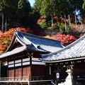 写真: 紅葉に彩られる釈迦堂